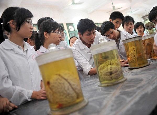 Sinh viên đại học Y chưa bao giờ bị đánh giá thấp khi đi dạy gia sư môn Sinh