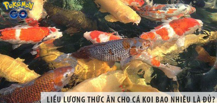 Liều lượng thức ăn cho cá Koi bao nhiêu là đủ?